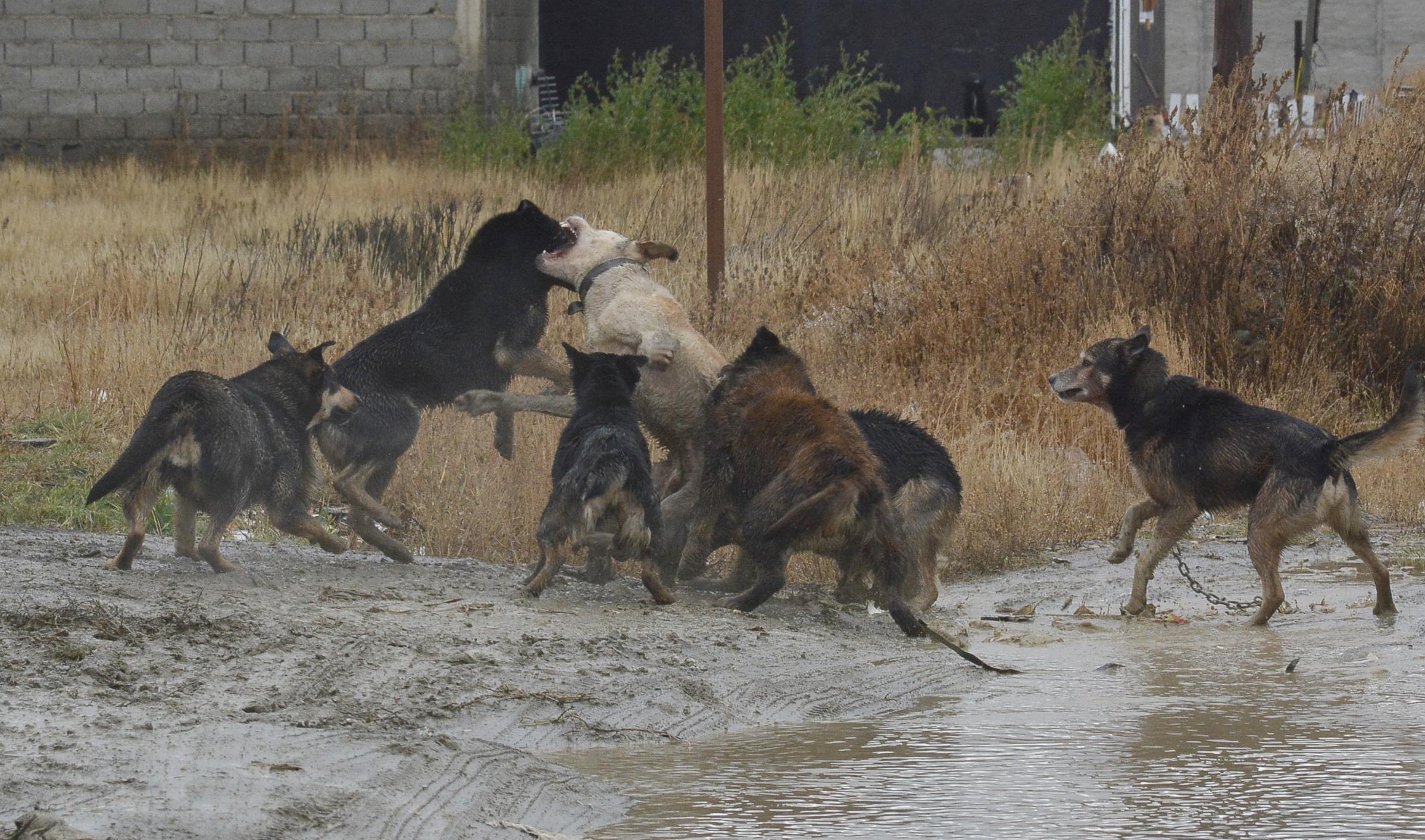 Una jauria de perros atacó el cadáver del hombre. FOTO: JOSÉ SILVA