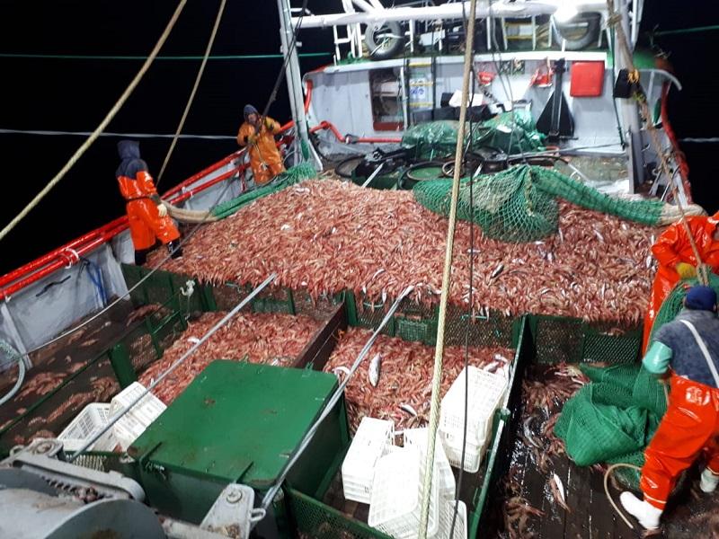 La mayoría de las pesqueras habilitadas buscarán colocar el langostino salvaje que se pesca en aguas patagónicas.