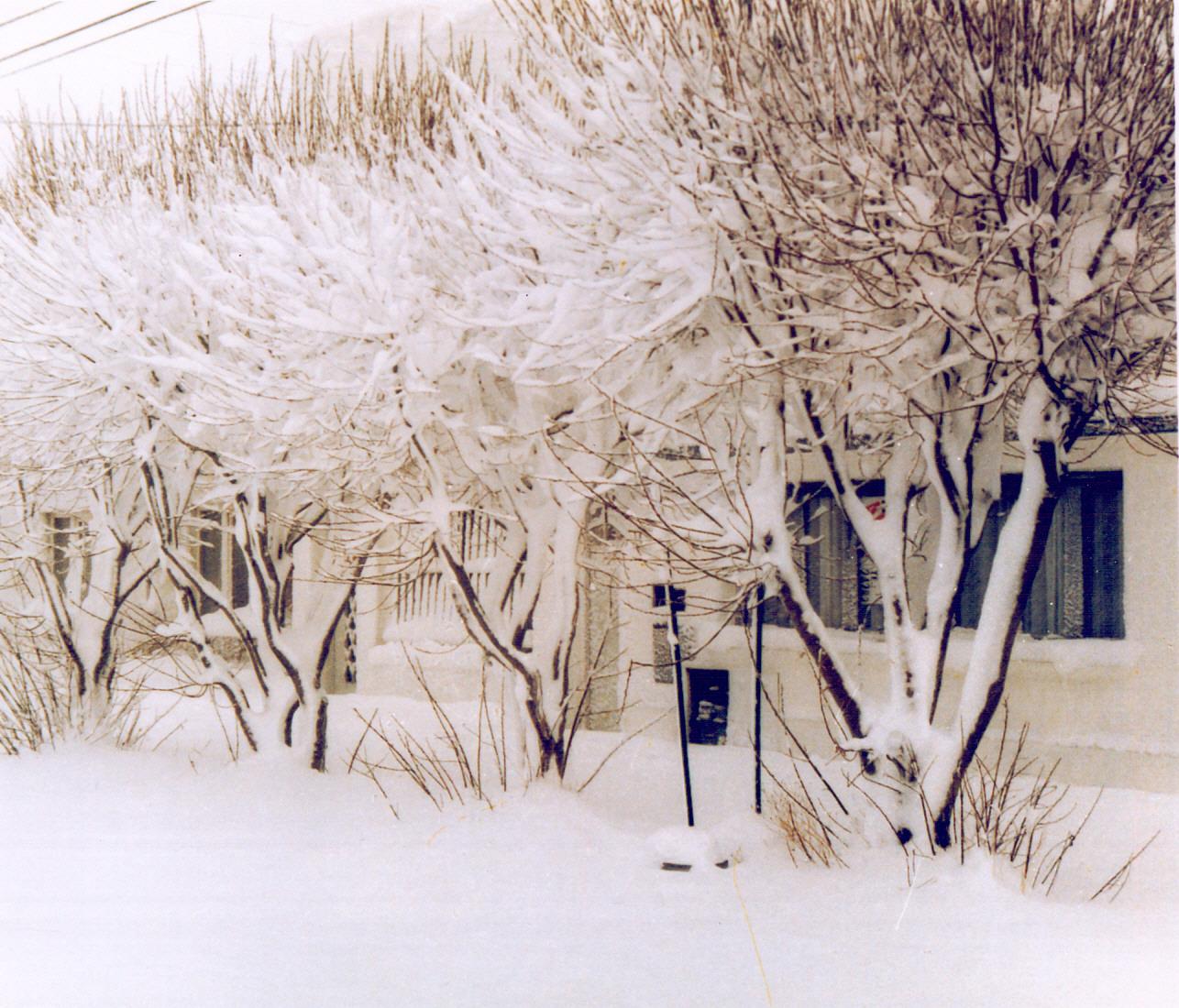 Los árboles nevados reflejaron la típica postal invernal. FOTO ARCHIVO LOA