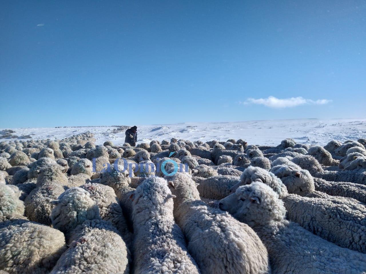 La intensidad de la nieve fue mayor en la zona noroeste y centro de la provincia