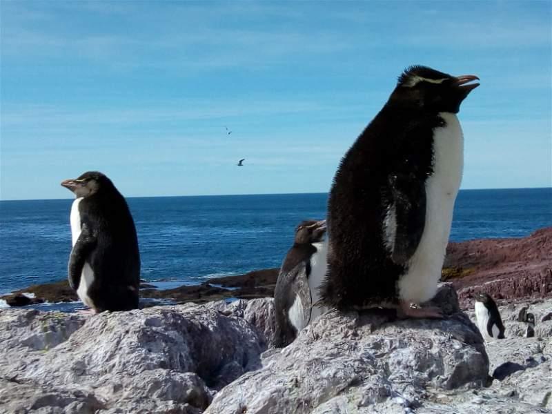 El parque interjurisdiccional Isla Pingüino uno de los atractivos difundidos.