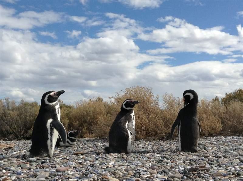 Isla Pingüinos.