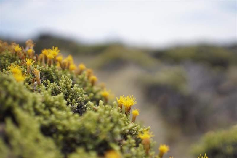 Parque Nacional Perito Moreno.