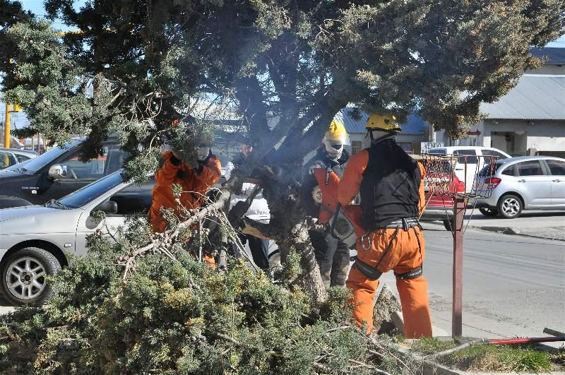 En Batalla Puerto Argentino al 200, los efectivos tuvieron que podar un árbol ya que habían cables enredados. FOTO: MIRTA VELÁSQUEZ