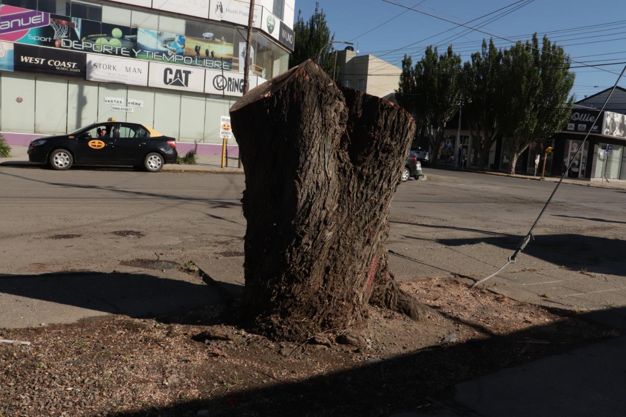 Árbol talado en Vélez Sarsfield. Foto: José Silva / La Opinión Austral