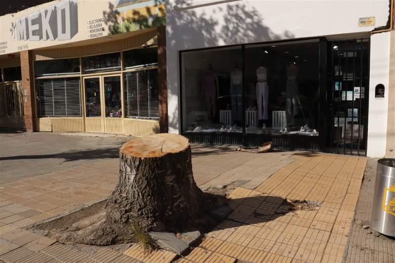 El árbol talado afuera del local 'Spoleto' que generó la indignación. Foto: José Silva / La Opinión Austral