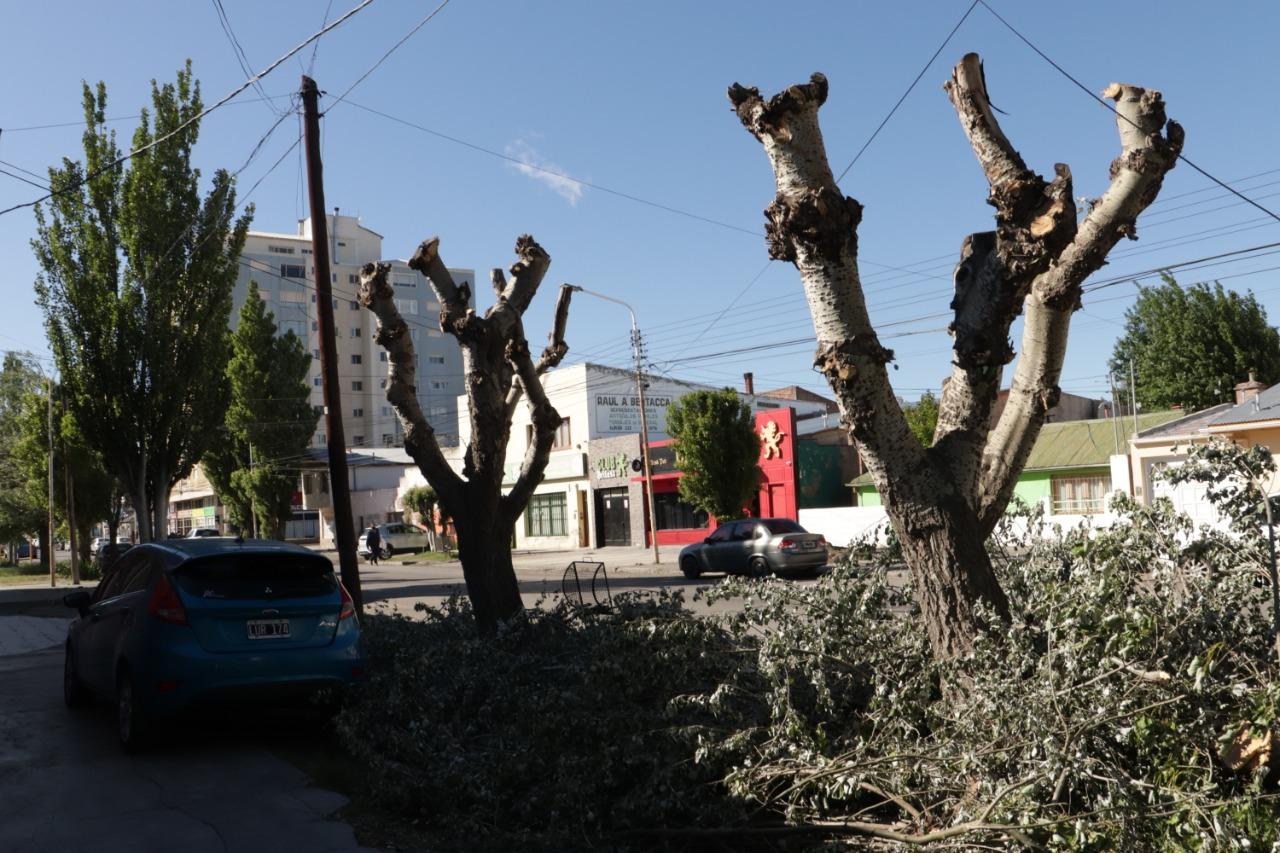 La calle Alberdi fue la más devastada por la tala. Foto: José Silva / La Opinión Austral