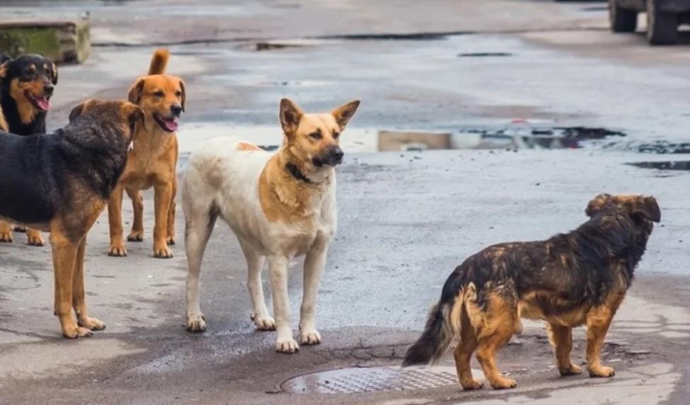 Los perros que deambulan en la vía pública tienen dueños.