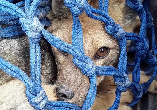 El zorro ya fue liberado a su hábitat natural.