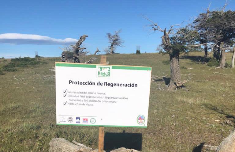 El trabajo de conservación y restauración es parte de la sustentabilidad.
