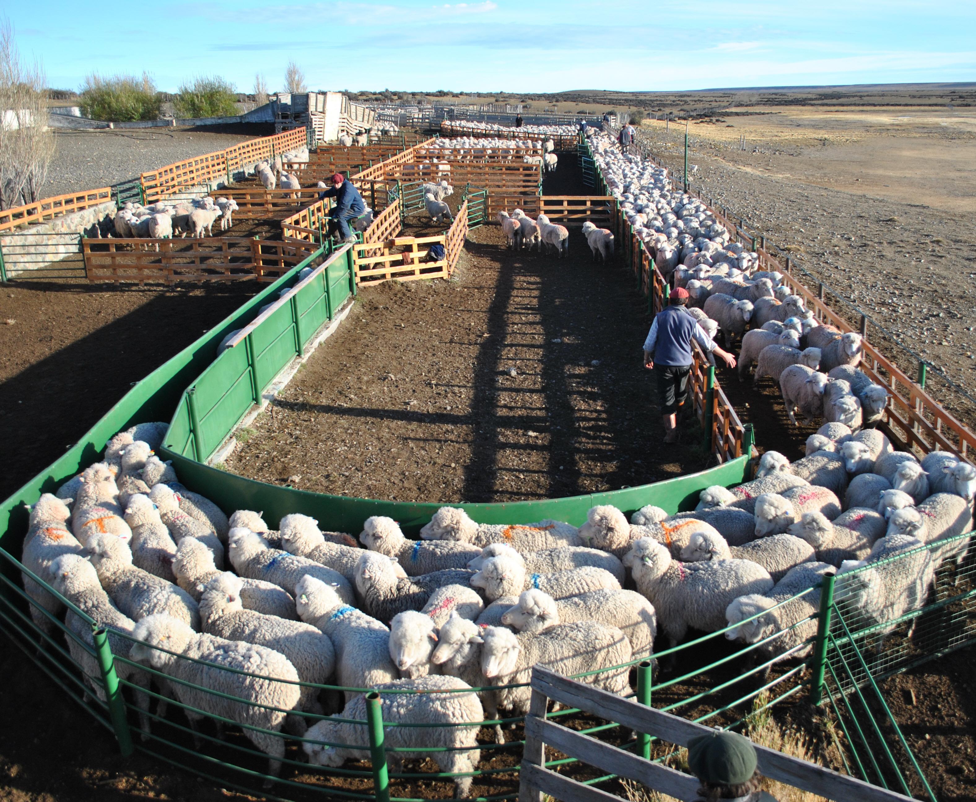 La ley tiene un régimen especial para los pequeños productores.